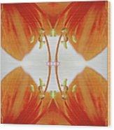Inside An Amaryllis Flower Wood Print