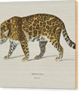 Jaguar  Panthera Onca  Illustrated By Charles Dessalines D' Orbigny  1806-1876  Wood Print