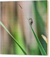 Japanese Beetle Climbs Plant Wood Print