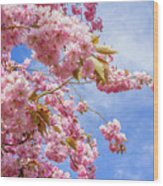 Japanese Cherry Wood Print