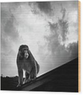 Japanese Macaque On Roof Wood Print