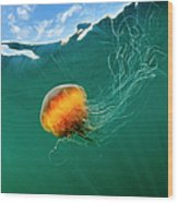 Jellyfish, Alaska Wood Print