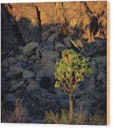 Joushua Sunset 1 Wood Print