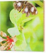 Jungle Bug Wood Print