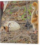 Just Hatching Wood Print