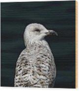 Juvenile With Attitude Wood Print
