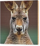 Kangaroo Macropus Sp., Head-shot Wood Print