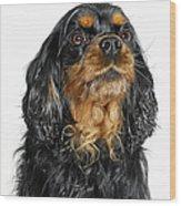King Charles Cavalier Portrait Wood Print