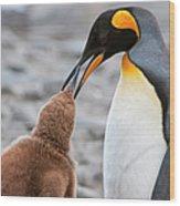 King Penguin Feeding A Chick Wood Print