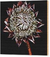 King Protea Top Wood Print