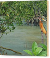 Kingfisher In The Mangroves Wood Print