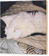 Kitty Kitty Wood Print