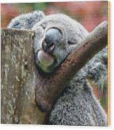Koala Catching Zs Wood Print