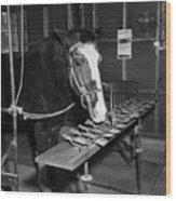 Lady Wonder The Talking Horse Wood Print