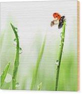 Ladybug On Green Grass Wood Print