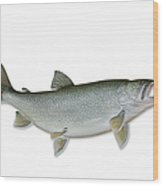 Lake Trout With Clipping Path Wood Print