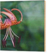 Lancifolium - The Tiger Lily Wood Print