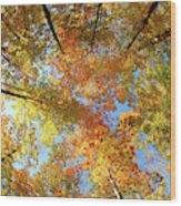 Langlade County Canopy Wood Print