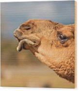 Large Beautiful Camel Wood Print