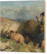 Lassie Herding Sheep Wood Print