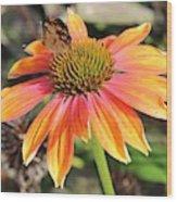 Last Cone Flower Wood Print
