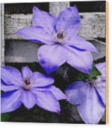 Lavender Clematis On Vine Wood Print