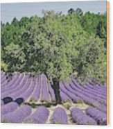 Lavender Field And Tree Wood Print