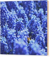 Lavender Field With Bee Wood Print