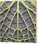 Leaf Underside With Stable Construction Wood Print