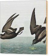 Least Stormy Petrel, Thalassidroma Pelagica By Audubon Wood Print