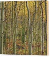 Lemhi Aspens Wood Print