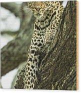 Leopard, Ndutu Plains, Tanzania Wood Print