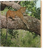 Leopard Sitting On A Branch Wood Print