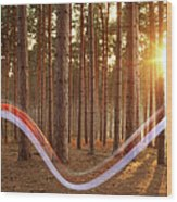 Light Swoosh In Woods Wood Print