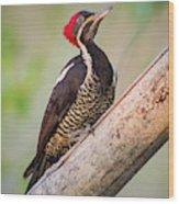 Lineated Woodpecker La Palmita Casanare Colombia Wood Print