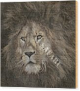 Lion Safari Wood Print