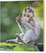 Little Baby-monkey In Monkey Forest Of Wood Print