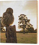 Little Owl Sunset Wood Print