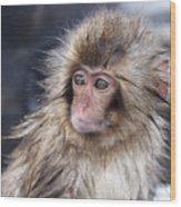 Little Snow Monkey At The Jigokudani Wood Print