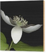Little White Wood Print