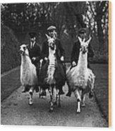 Llama Ride Wood Print