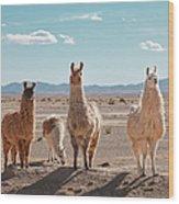 Llamas Posing In High Desert Wood Print
