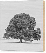 Lone Holm Oak Tree In Snow, Somerset, Uk Wood Print