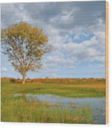 Lone Tree By A Wetland Wood Print