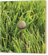Lonely Little Mushroom Floating On The Grass Wood Print