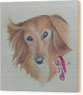 Long Haired, Miniature Dachshund Wood Print