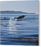 Long-nosed Common Dolphin,delphinus Wood Print