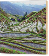 Lonji Rice Terraces Wood Print