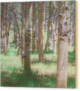 Lost In The Woods - Kenosha Pass, Colorado Wood Print