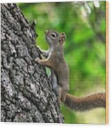 Lost Nuts Wood Print